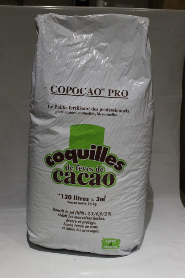 eva, cacao