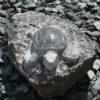tortue, pierre, décoration, jardin, desmarest, soissons, paris, compiegne, reims