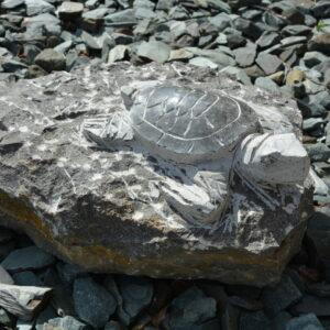 tortue, décoration, jardin, pierre, soissons, compiègne, paris, reims
